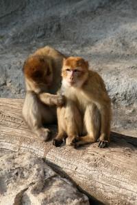 monkey-1072767_960_720