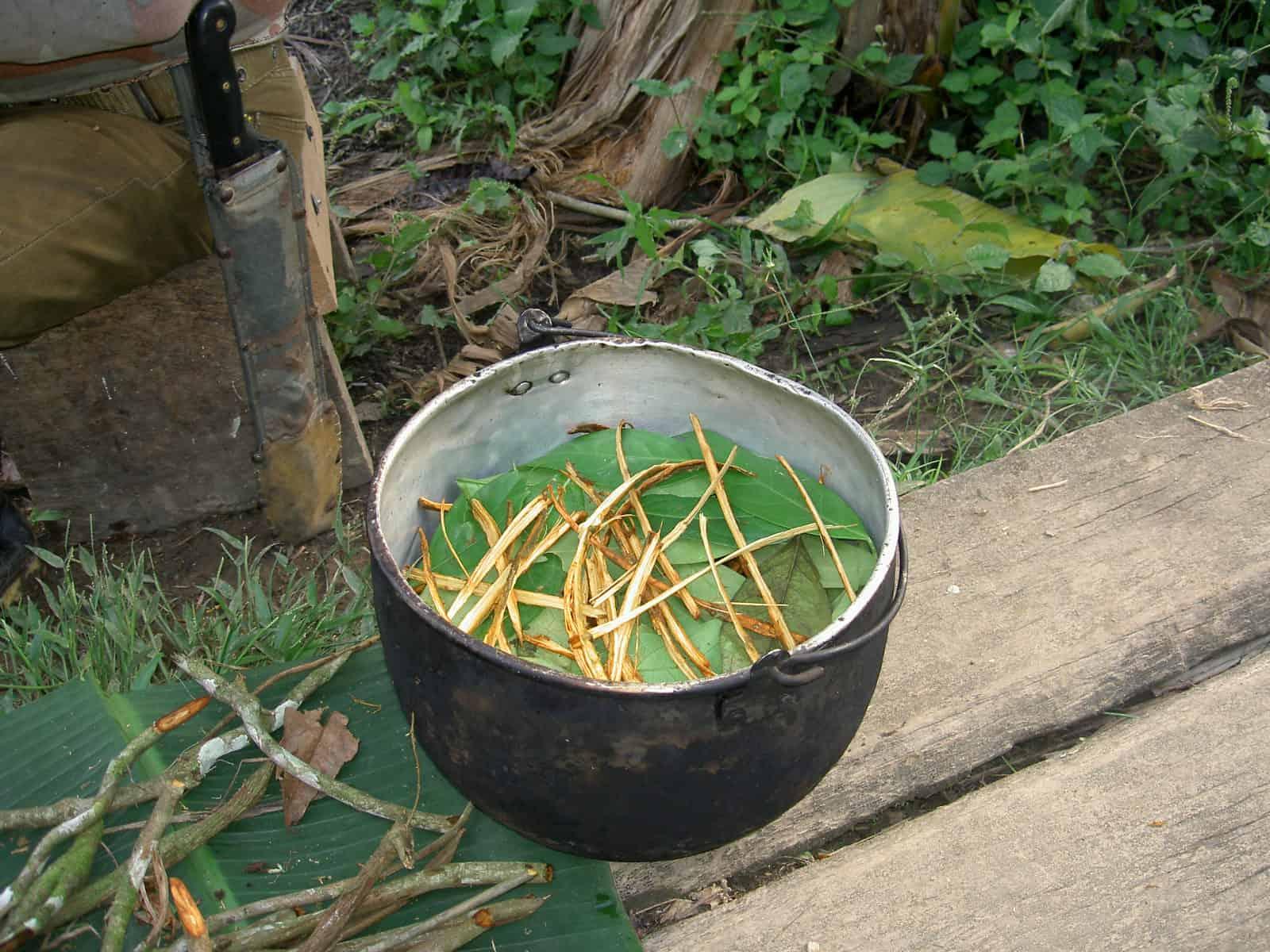 Az ayahuasca pszichoaktív főzet, erősen hallicinogén szer, mely használatát sámán felügyeli és irányítja a belső mélységeinkbe való utazásunkat.