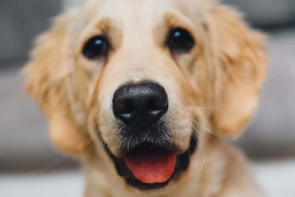 Habár nincs vizsgához, jogosítványhoz kötve az ebvásárlás, semmiképpen se hozzunk kutyát a házhoz egy meggondolatlan fellángolás miatt. Egy kutyának ugyanis nem ház kell, hanem otthon.