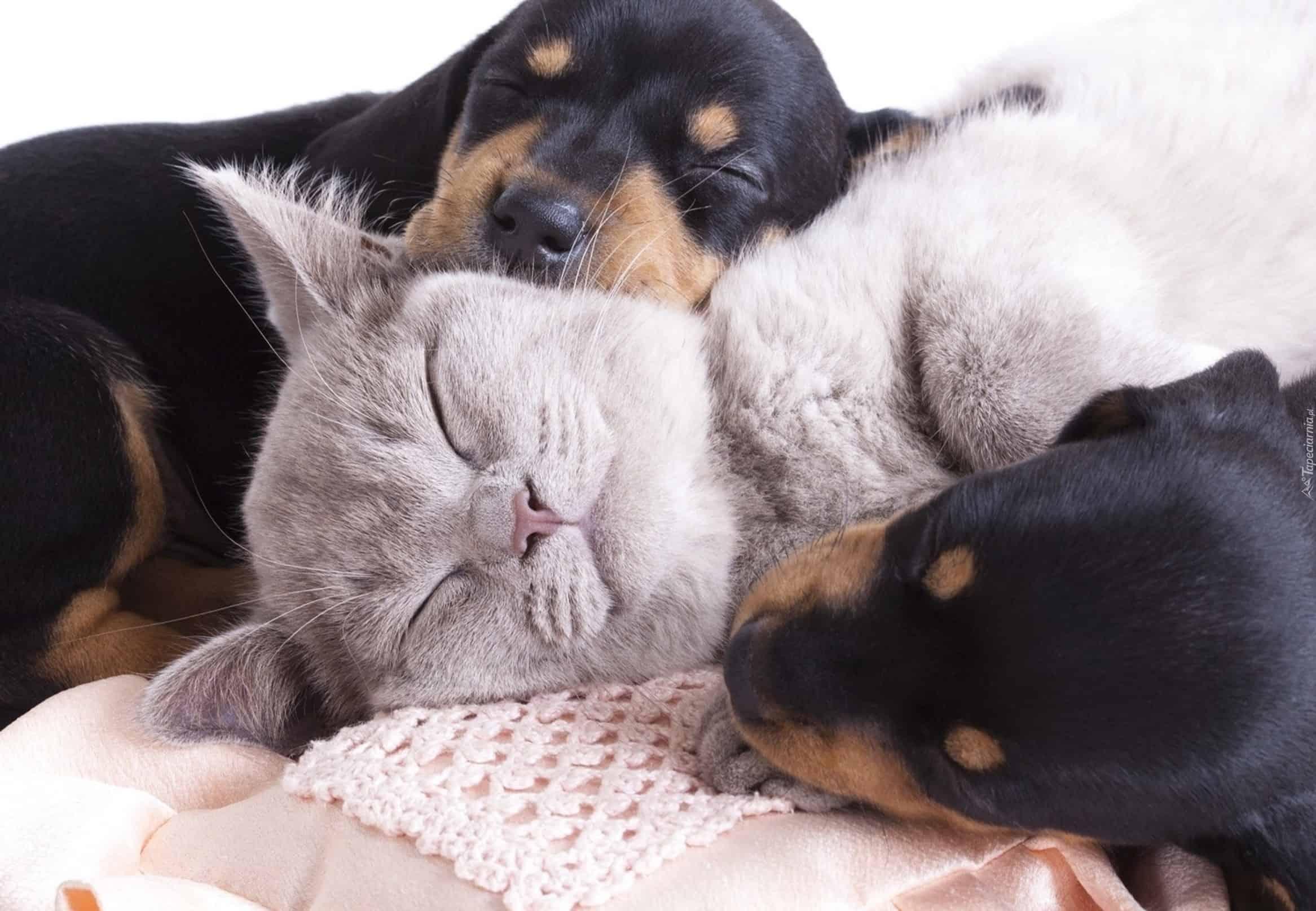 Habár a kutyák ösztönei számos tekintetben változtak, idomultak az emberek közötti élethez, nem vesztek el belőlük. Amikor a kutyánk meglát az erdőben egy állatot és nem jön vissza hozzánk, hiába hívjuk, azért van, mert épp a zsákmányszerő ösztön dolgozik benne, s valójában meg sem hallja a hangunkat.