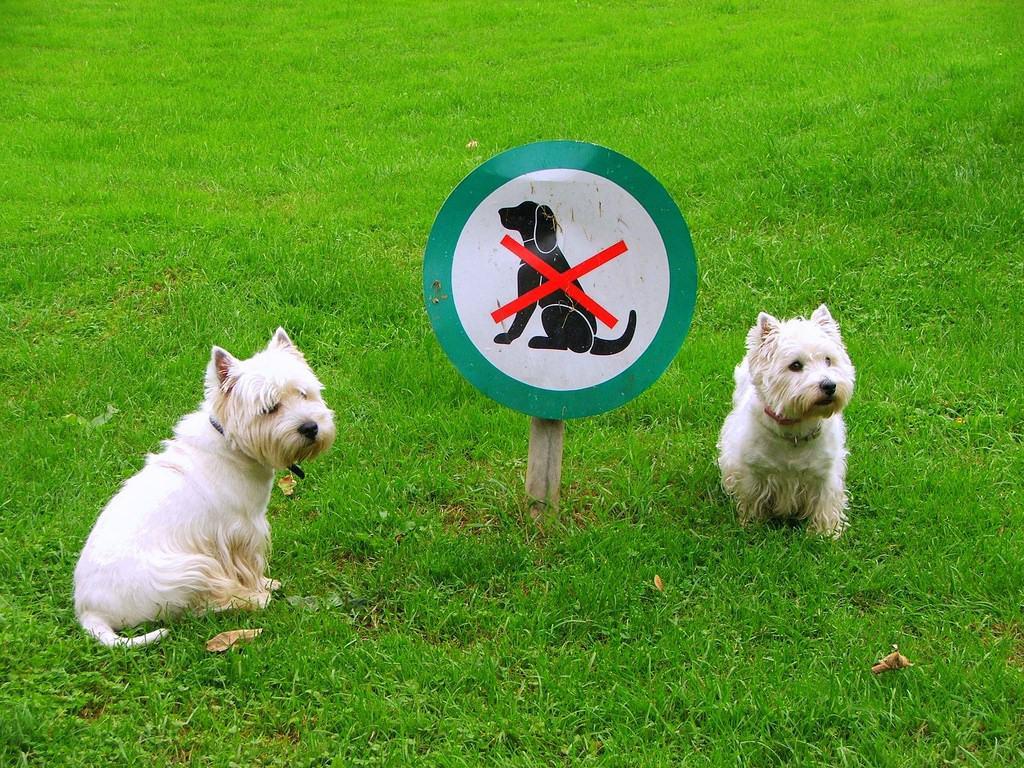 Tegyük fel magunknak a kérdést: mi lenne a mi kutyánkkal, ha 3 napra magára maradna a természetben? Túlélné egyáltalán?